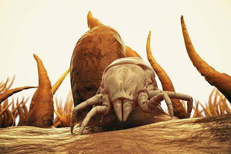 Bed Bug On A Duvet